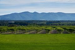 Pla de Santa Maria (Escipi) Tags: verde paisaje nubes campo prado montaa aire libre hierba almendros llanura pladesantamaria minoltamdmacro100mmf4