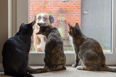 Who let the dog out? (c_muschol) Tags: dog cat hund gato katze haustier tier ktzchen catmoments