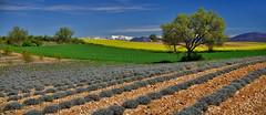 Images de Provence....... (Malain17) Tags: clouds fleurs photography image pentax couleurs photographers ciel arbres neige provence capture paysage printemps montagnes lumire