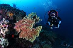 SeaFan (Randi Ang) Tags: bali coral canon indonesia photography eos bay fan underwater angle crystal wide dive scuba diving fisheye ang 15mm nusa randi 6d seafan nusapenida penida