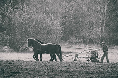 sowing (dziurek) Tags: old horse white plant man black nature work vintage blackwhite spring ancient nikon farming grain hard poland retro d750 environment 300 tradition agriculture nikkor fx job cultivation pf peasant spreading sowing backwardness dziurek dziurman pdziurman farmerrole
