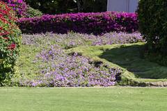 Colorful Landscape (rschnaible) Tags: flowers plants usa color grass yard landscape botanical hawaii us colorful lawn maui wailea