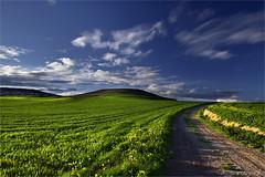 El corazn verde (Anpegom fotografa) Tags: blue espaa verde green azul spain valladolid castillaylen torrelobatn anpegomfotografa