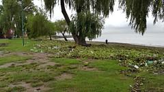 Costa de tormenta (7sombreros) Tags: costa basura tormenta ecologa sanisidro rodelaplata camalotes