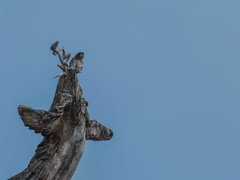 (stevenking9987) Tags: nikon sp 70300mm tamron 456    d5300