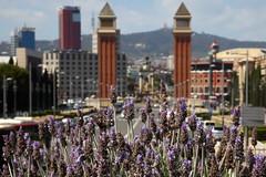 Barcellona 2016 (Ale (ale66lo)) Tags: spain towers catalonia barcellona spagna torri veneziane