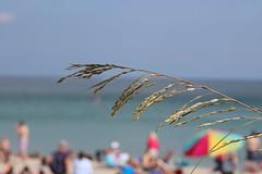 IMG_0075 (Mike H Photography) Tags: sea sun beach relax joy sunny dania