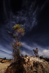 Tree on a sand hill (Leanne Cole) Tags: tree landscape sand photographer photos dune australia images victoria environment fineartphotography mallee landscapephotography nikonaustralia wimmera environmentalphotography fineartphotographer nikond800 environmentalphotographer lakealbacutya leannecole leannecolephotography