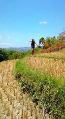 Cadapdapan Rice Terraces (xhitmiming) Tags: travel friends summer black green love nature field asian photography friendship rice philippines terraces blogger wanderlust traveller adventure solo bohol april nomad runaway gypsy candijay summergoals khattjah khattcozaire bigaernz cadapdapan nekohymz