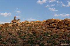 A bedouin men riding a donkey. (carmine.contrafatto) Tags: sky colours desert wadirum donkey adventure paesaggi arid giordania    canon600d