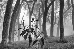 IMG_2740 (d.dupre) Tags: bw brouillard runion maido