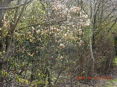 2016_04_230016 (Gwydion M. Williams) Tags: uk greatbritain england britain coventry westmidlands warwickshire