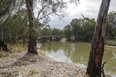 River Scene (oz_lightning) Tags: bridge nature water ecology river landscape australia nsw newsouthwales eucalyptus aus riparian myrtaceae riverina darlingtonpoint sonyrx100iii