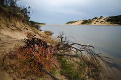 powlett river estuary xi (Kenneth Rowe) Tags: longexposure multipleexposures powlettriver d7000
