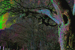 homage to lovecraft (dick_pountain) Tags: trees color weird colours lovecraft hplovecraft eery colourised mashups thecoloroutofspace