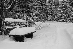Take a seat and have a rest ! (tastentipper72) Tags: wood schnee winter bw snow sony bank sw monochrom wald bäume rennsteig tettau slta37