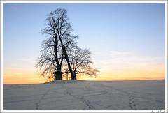 Zu zweit und nicht allein (schmilar77) Tags: ort schnee dämmerung pflanzen baum winter länder deutschland thüringen abendrot eichsfeld tageszeit bildbeschreibung abenddämmerung natur jahreszeit kirchworbis sigma1750f28exdcoshsm