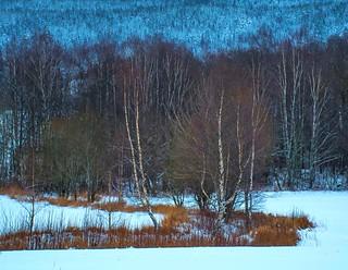 Winter Scenery 2