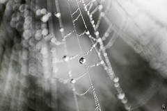 The world in a Drop! (lightexperiment) Tags: world street bw white black macro water rain by sepia spider bokeh web spiderweb drop dew droplet passing amateur dehradun mussorie lightexperiment fahadjameel