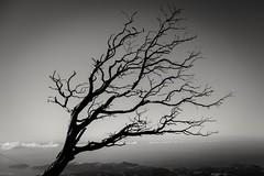 Solitary Tree (Janjan_31) Tags: philippinemountains teampilipinas d3300