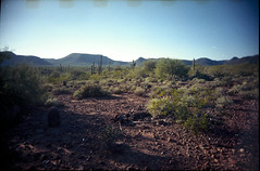 Nikon Fun Touch 5 / Kodak GC 400 (K e v i n) Tags: arizona cactus southwest film nature analog cacti 35mm landscape outside desert az scan firstroll sonorandesert saguaros 1stroll kodakgc400 blackcanyontrail epsonv500 nikonfuntouch5 blackcanyonnationalrecreationtrail