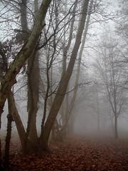 La Nebbia (r_evolution63) Tags: trees winter tree nature colors fog alberi sony natura vegetation nebbia albero inverno colori compact dscw7 vegetazione