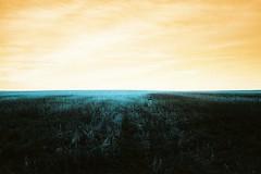 Land (chloecoislier) Tags: analog landscape lomo fineart memories ishootfilm psychedelic grainisgood 35mmphotography naturelovers experimentalphotography keepfilmalive filmshooter believeinfilm heygrain chloedupontphotography lomotuequoise