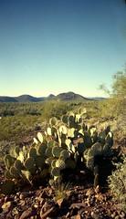 Nikon Fun Touch 5 / Kodak GC 400 (K e v i n) Tags: arizona cactus southwest film nature analog cacti 35mm landscape outside desert az scan pricklypear firstroll sonorandesert saguaros 1stroll kodakgc400 blackcanyontrail epsonv500 nikonfuntouch5 blackcanyonnationalrecreationtrail
