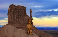 The Monument Valley Dingo (Dave Toussaint (www.photographersnature.com)) Tags: travel sunset arizona usa dog nature animal photoshop canon pose landscape photo interestingness google interesting twilight raw december photographer image dusk indian scenic picture clarity posing az explore cc adobe sacred stray getty sw monumentvalley fourcorners reservation adjust americansouthwest coloradoplateau 2015 navajonation themittens denoise topazlabs triballands photographersnaturecom davetoussaint 5dmarkiii creativecloud
