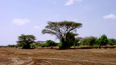 Fejej area (2005) (Desc/Em) Tags: africa landscape ethiopia wadi steppe afrique hornofafrica omo acacias ethiopie turkana easternafrica oued turkanalake snnpr southernethiopia afriquedelest galleryforest turkanabasin omoturkanabasin ethiopiakenyaborder keskeriver