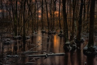 Sunset in a riparian forest