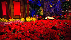 Bellagio_Chinese New Year 1-2 (Swallia23) Tags: las vegas flowers money hotel peach chinesenewyear casio nv bellagio yearofthemonkey 2016 conservatorybotanicalgarden