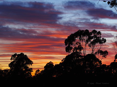 Sunrise Today ~ 13 Feb 2016 (gahenty) Tags: silhouette clouds sunrise