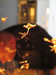 little fairies (Jellibat) Tags: art gallery artgallery australia mona tasmania hobart berridale museumofoldandnewart