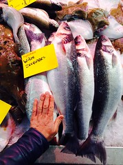 Supermooie wilde zeebars (Martitchka) Tags: fish netherlands market peces fresh fisch mercado holanda pescado markt pesca vis fresco niederlande verse paisesbajos lubina zeebars