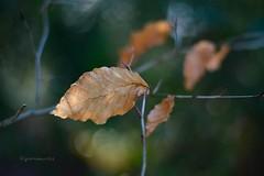 (gewoon-marieke) Tags: light blur nature forest 50mm nikon bokeh leafs d7100