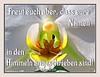 Im Himmel angeschrieben / written in heaven (Martin Volpert) Tags: flower fleur heaven jesus flor pflanze himmel orchidaceae bible blomma christianity orchidee blume fiore blüte bibel blomster virág christus lore biblia bloem blóm çiçek floro kwiat flos ciuri bijbel kvet knabenkraut kukka cvijet flouer glauben christentum bláth cvet zieds õis floare תנך blome žiedas bibelverskarte angeschrieben mavo43 luke1020 lukas1020
