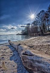 Am Strand von Klink im Winter (Marnie Pix) Tags: deutschland mecklenburgvorpommern klink mritz baumstamm