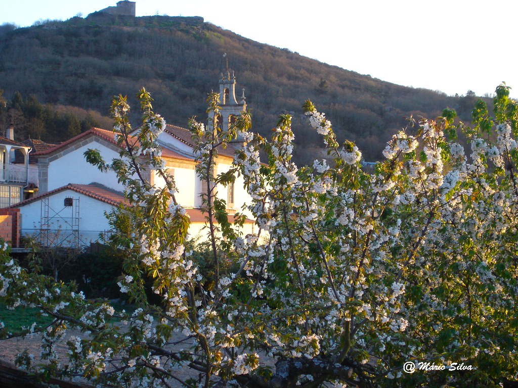 Águas Frias (Chaves) - ... Flores de cerdeira ... a igreja e o Castelo ...