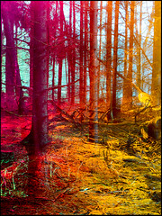 20160228-009 (sulamith.sallmann) Tags: trees blur nature forest germany landscape effects deutschland colorful natur vivid filter effect landschaft wald bume brandenburg unscharf deu bunt effekt barnim wandlitz sulamithsallmann folientechnik