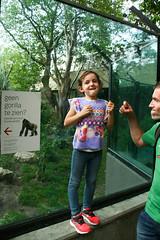 my baby gorilla (Maluni) Tags: netherlands amsterdam zoo miranda olanda gorillas