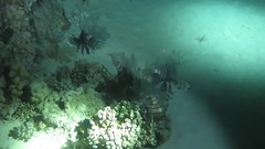 MVI_0572 (eye[4]eye) Tags: egypt diving gypten tauchen bluewaves