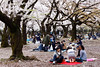 20160405-045-Picnics under Yoyogi-koen cherry blossoms (Roger T Wong) Tags: travel people holiday japan garden balloons tokyo spring picnic crowd harajuku cherryblossoms yoyogikoen 2016 canonef70200mmf4lisusm canon70200f4lis canoneos6d rogertwong