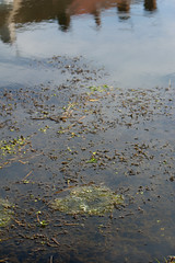 Mass of frogspawn, Penn Common (Dave_A_2007) Tags: england nature wildlife amphibian frog spawn staffordshire wolverhampton ranatemporaria