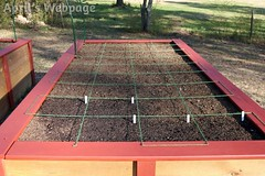 Right Raised Bed (aprilswebpage) Tags: gardening squarefootgarden squarefootgardening raisedgardenbed
