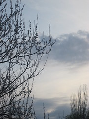 IMG_4062 (Souls_Eater) Tags: trees windows sky building speed cherry evening spring walk ukraine wires apricot everydaylife donetsk