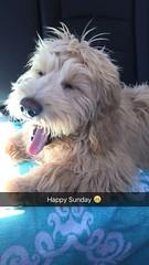 Raleigh loves Sundays!!