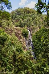 Kondalilla Falls (Tatters ) Tags: waterfall rainforest australia queensland blackall sunshinecoasthinterland