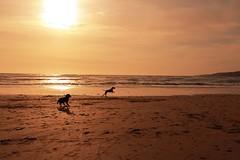 Playtime (garethleethomas) Tags: sunset dog sun beach spring sand play free buddy