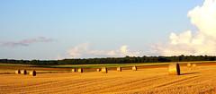 Soir d't (atrachez) Tags: nature champs paysages ete